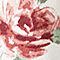Scarlet Rose Floral