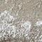 Lichen Gray Velvet